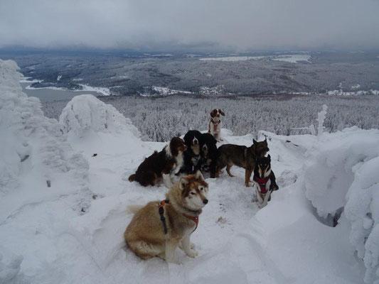 Fire, Vreni, Selma, Alegro, Keks, Rumpel und der 14jährige (!) Max auf dem Gipfel des Haßberges