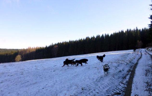Die Wiesen oberhalb von Jöhstadt laden zum Spielen und Toben ein