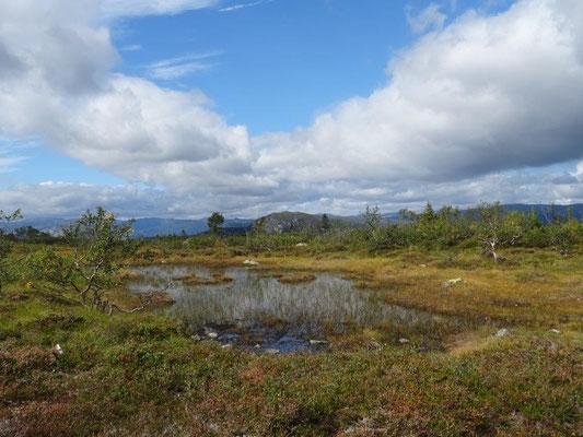 Hochmoor am Homfjellet