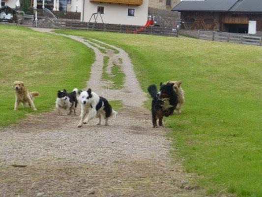 Die Hunde sind los :-)