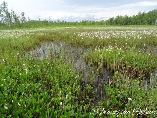 Moorlandschaft am Kävsjön
