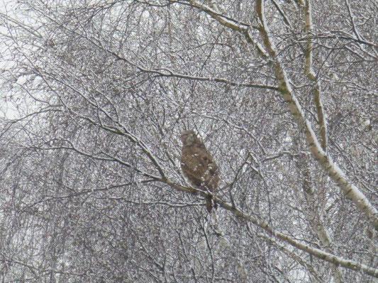 Ostermontag 2015 - Wintereinbruch auf der Hochfläche bei Rosenthal