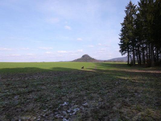 ... und ganz wie sie es gelernt hat, liegt sie alsbald 20 Meter weiter im Feld ... (Foto: Kaj Kinzel)