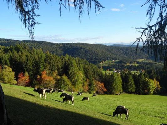 Herbst an der Leadner Alm