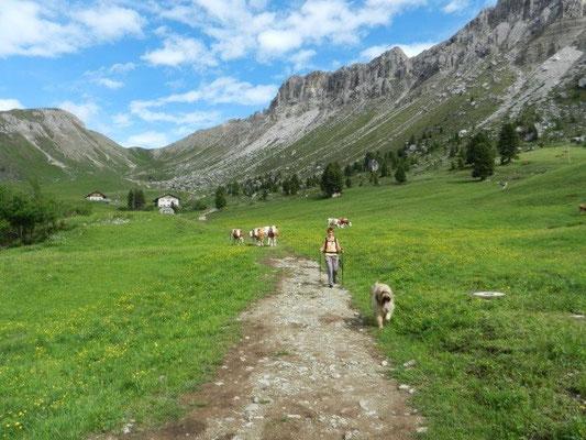 ... und drei junge Rinder verfolgten uns, bis wir das Almgelände verlassen hatten.