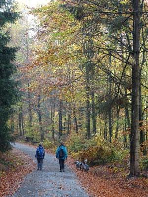 Im Herbst ist es besonders schön, durch die ausgedehnten Mischwälder zu wandern.