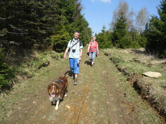 Hundewanderer im Erzgebirgswald