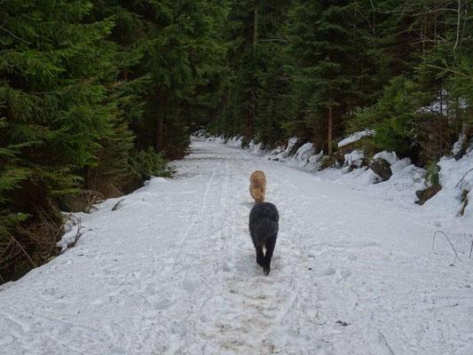 Im tief eingeschnittenen Tal halten sich Schnee...
