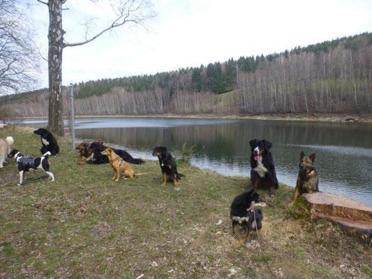 Alle Hunde auf ein Bild zu bekommen, ist immer wieder mit viel Spaß verbunden :-)