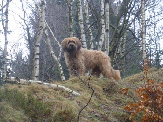 Nepo, der Wolf des Osterzgebirges :-)