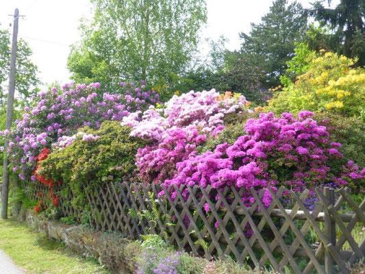 Blühender Garten in Naundorf