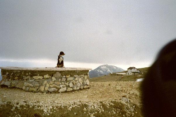 Senta auf dem Monte Baldo