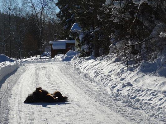 Vreni genießt die Wintersonne