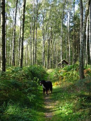 Der Weg zur Grenzplatte führt duch einen sonnendurchfluteten Hochwald