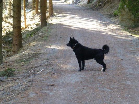 Merkwürdige Geräusche dringen durch den Wald - Schnaufen und Pfeifen - was mag das wohl sein? ...