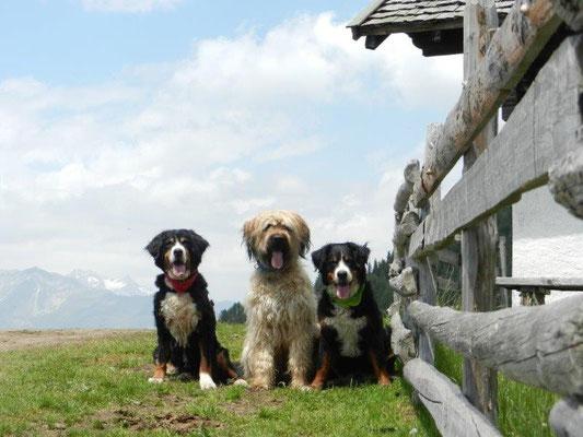 Senta, Nepomu,k und Gusti an der Hirzerhütte