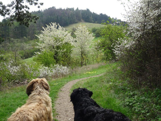 Frühlingswanderung