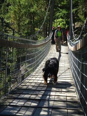 Die Hängebrücke ist für manchen Zwei- und Vierbeiner eine Herausforderung. Vreni meisterte sie mit Bravour :-)