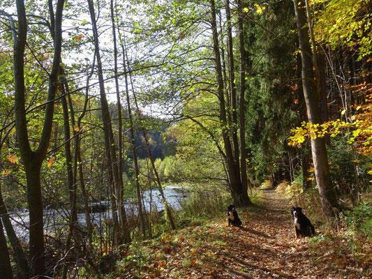 Goldener Herbst im Flöhatal
