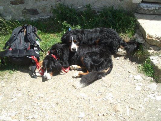 Senta und Gusti nach einer Woche Wanderurlaub :-)