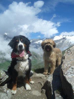 Die nun 12jährige Senta und Nepomuk auf dem Sajat-Höhenweg. Im Hintergrund der Großvenediger