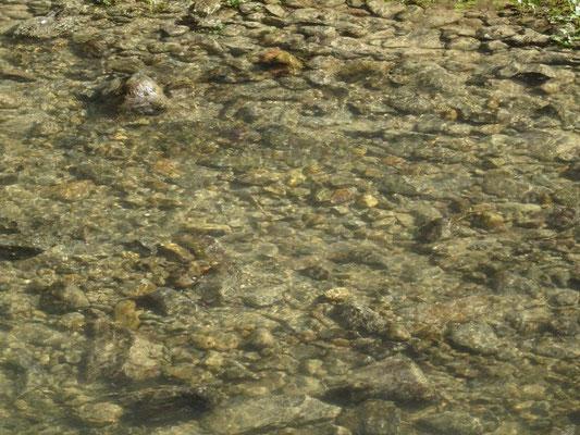 Glasklares Wasser der Polenz