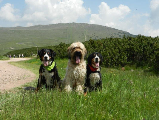 Gusti, Nepomuk und Senta am Rittnerhorn