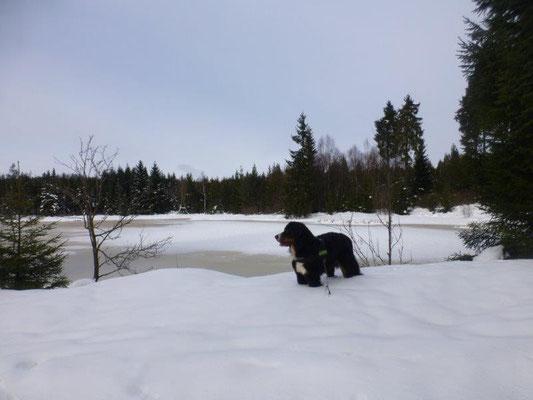 Am Lehmheider Teich