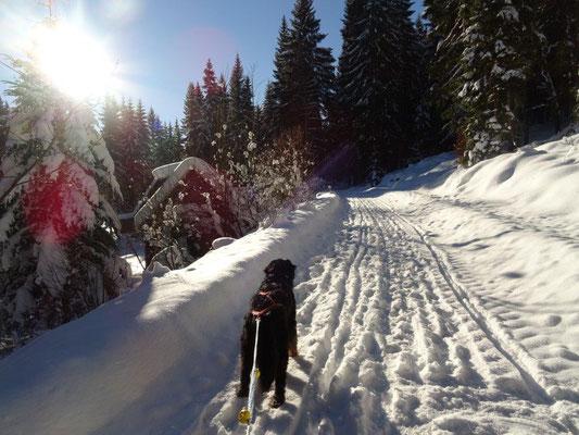 Winterwonderland im Pressnitztal