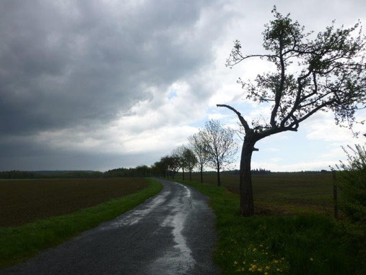 Nach dem Regenguß