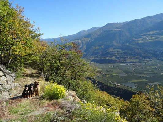 Wandern im Vinschger Sonnenberg