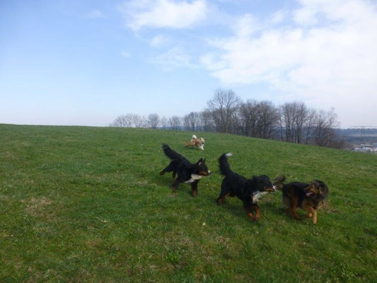 Spiel und Spaß auf den Wiesen bei Scheibenberg