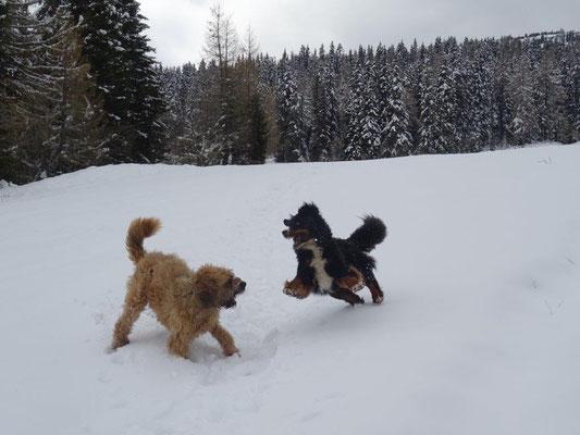 Toben im Schnee