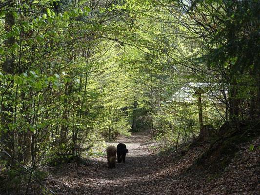 Auf dem Weg zur Wolfskapelle