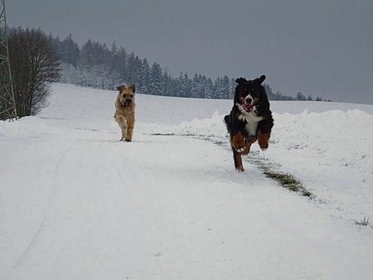 """Auf dem Feldweg bei der """"Linde"""""""
