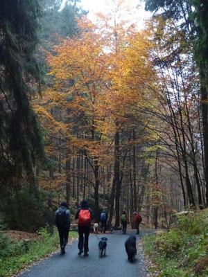Abstieg nach Schmilka