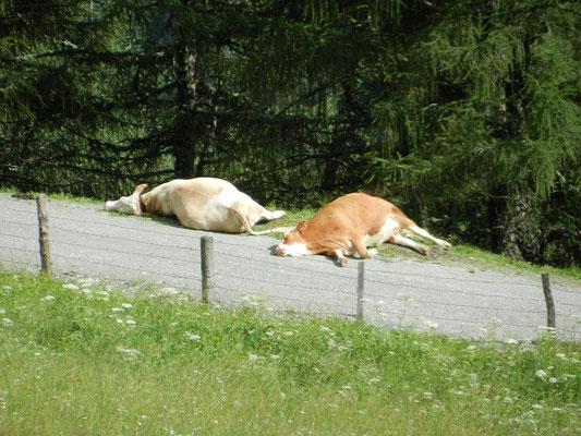 Man soll keine schlafenden Kühe wecken :-)