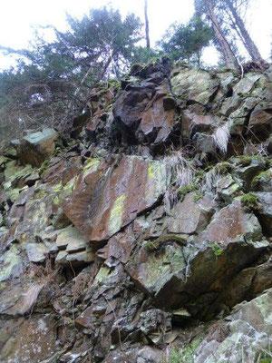 Der obere Bereich des Polenztales wird nicht, wie in der Sächsischen Schweiz üblich, von Sandstein, sondern von Lausitzer Granit dominiert.