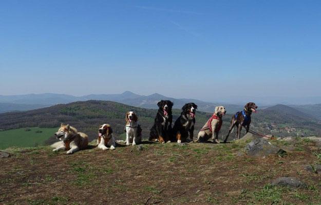 Hundegruppe auf dem Hradiště u Hlinné