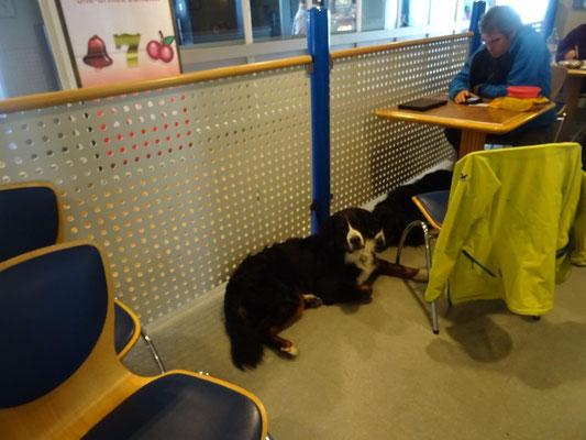 In der Pet Lounge haben nicht nur Vierbeiner ihre Ruhe :-)