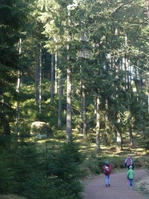 Morgendliche Sonnenstrahlen dringen durch das Grün des Waldes