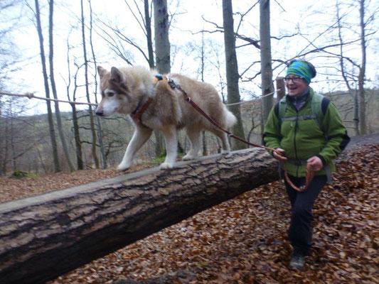 Auf dem Wildkatzen-Schleichpfad gibt es auch für Hunde schöne Übungsmöglichkeiten
