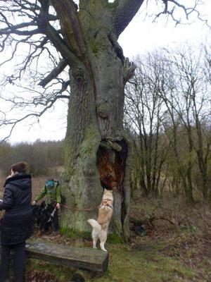 Was mag wohl in der Baumhöhle sein?