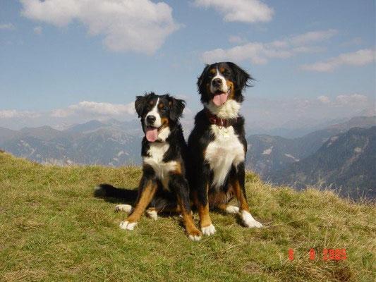 Gusti zum ersten Mal in den Bergen - oberhalb des Glasspasses bei Tschappina