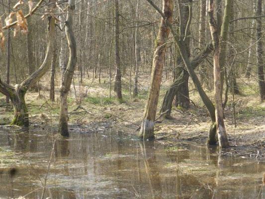 Sumpfgebiet bei Rosenthal