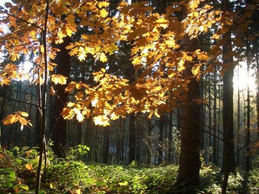 Herbst im Bielatal