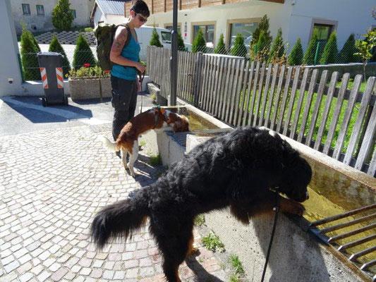 In Taufers gibts für jede Hundegröße eine eigenen Tränke :-)