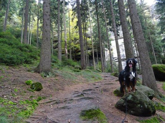 Aufstieg zu den Bärenfangwänden