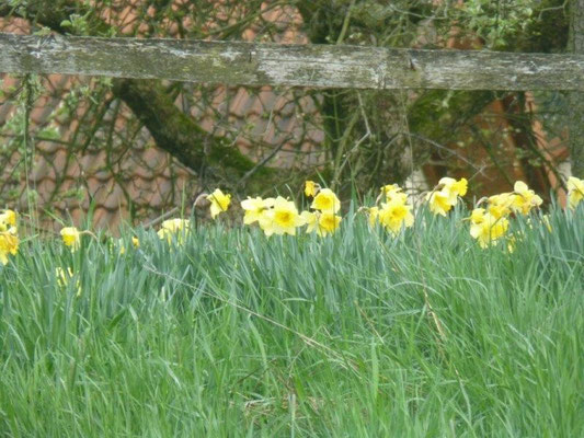 Frühling in Wehlen