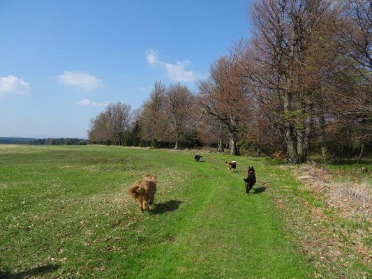 Die weiten Hochflächen des tschechisch-deutschen Grenzgebietes bieten viel Platz zum Rennen und Toben